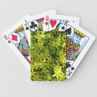 estrella verde como la planta herbaria de las baraja