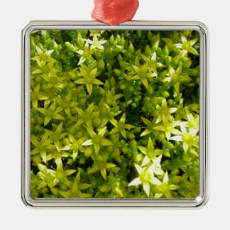 estrella verde como la planta herbaria de las adorno