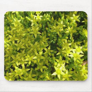 estrella verde como la planta herbaria de las alfombrillas de raton