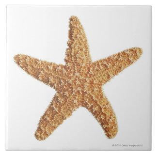 Estrellas de mar aisladas en blanco teja
