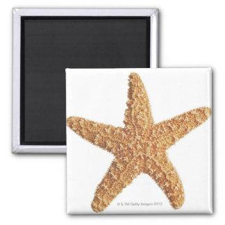 Estrellas de mar aisladas en blanco imán cuadrado