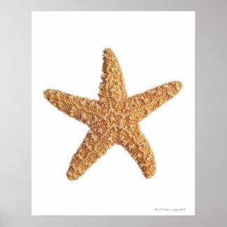 Estrellas de mar aisladas en blanco póster