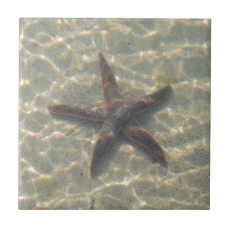 Estrellas de mar azulejos ceramicos