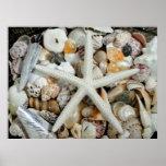 Estrellas de mar blancas y poster enorme de las cá