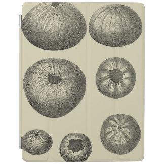 Estrellas de mar blancos y negros cover de iPad