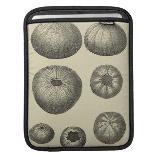 Estrellas de mar blancos y negros funda para iPads