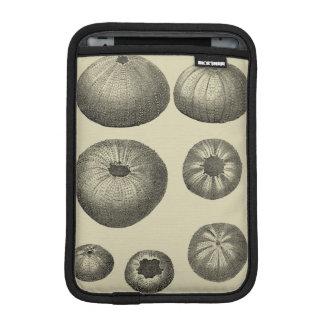 Estrellas de mar blancos y negros fundas de iPad mini