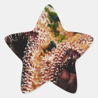 Estrellas de mar/caso de Phone'iPad del océano Pegatina En Forma De Estrella