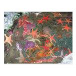 Estrellas de mar coloridas postal
