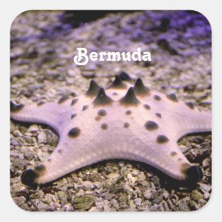 Estrellas de mar de Bermudas Pegatina Cuadradas