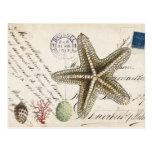 Estrellas de mar de la concha del vintage y postal