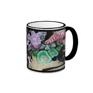 Estrellas de mar de la foto y taza de café hermosa