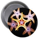 Estrellas de mar de la radiografía - botón pins