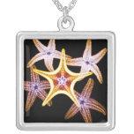 Estrellas de mar de la radiografía - collar