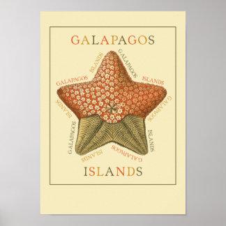Estrellas de mar de las islas de las Islas Galápag Póster