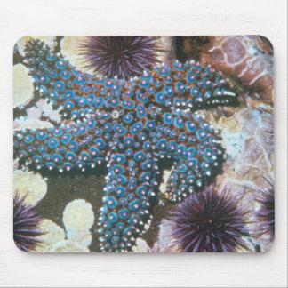 Estrellas de mar de Pisaster Giganteus Alfombrillas De Ratón