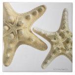 Estrellas de mar del azúcar en una estrella de mar azulejo cuadrado grande