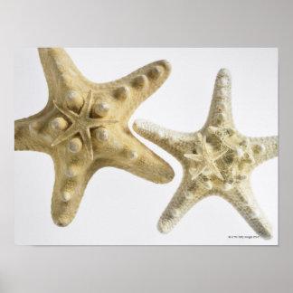 Estrellas de mar del azúcar en una estrella de mar posters