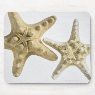 Estrellas de mar del azúcar en una estrella de mar alfombrilla de ratones