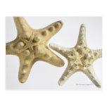 Estrellas de mar del azúcar en una estrella de mar tarjetas postales