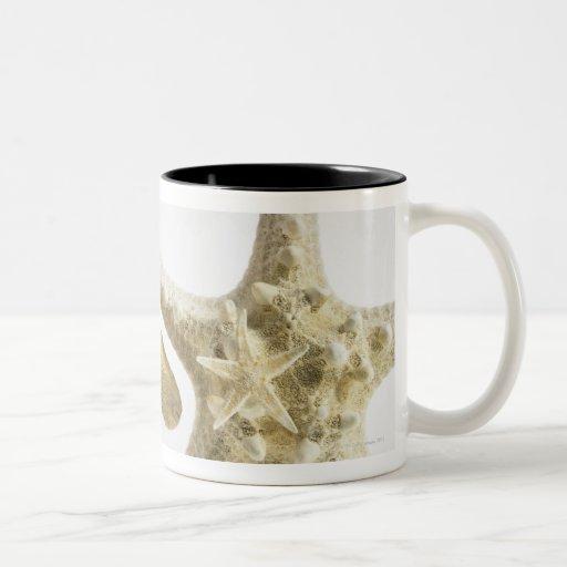 Estrellas de mar del azúcar en una estrella de mar taza dos tonos