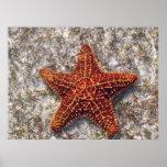 Estrellas de mar del océano poster