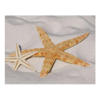 Estrellas de mar en arena postal