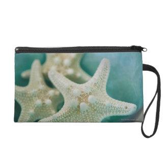 Estrellas de mar en cuenco