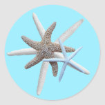 Estrellas de mar en el pegatina tropical redondo a