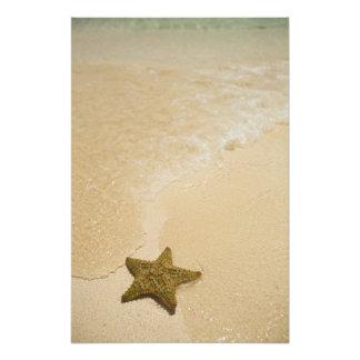 Estrellas de mar en la playa arenosa, tierra de la cojinete