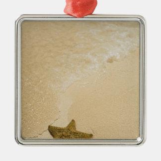 Estrellas de mar en la playa arenosa, tierra de la ornamentos para reyes magos