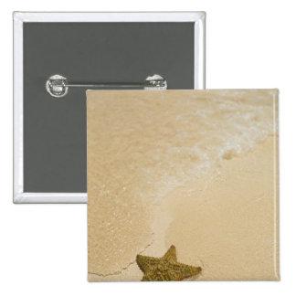Estrellas de mar en la playa arenosa, tierra de la pin cuadrado