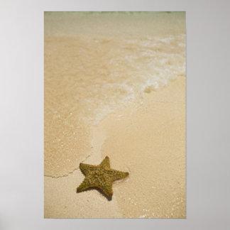 Estrellas de mar en la playa arenosa, tierra de la póster