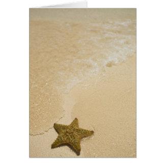 Estrellas de mar en la playa arenosa, tierra de la tarjeta de felicitación