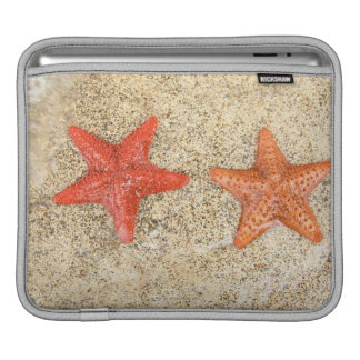 estrellas de mar en la playa, en el borde del océa funda para iPads