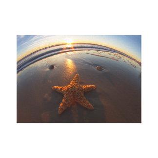 Estrellas de mar en la playa impresiones en lona estiradas