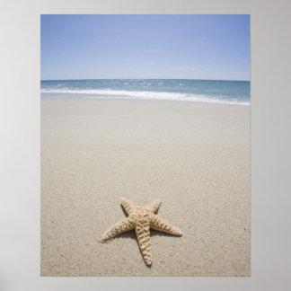 Estrellas de mar en la playa por Océano Atlántico Impresiones