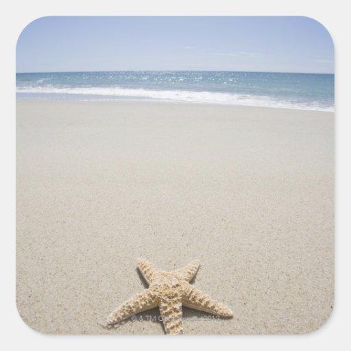 Estrellas de mar en la playa por Océano Atlántico Calcomanías Cuadradass Personalizadas