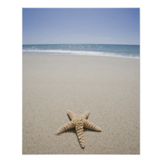 Estrellas de mar en la playa por Océano Atlántico Póster