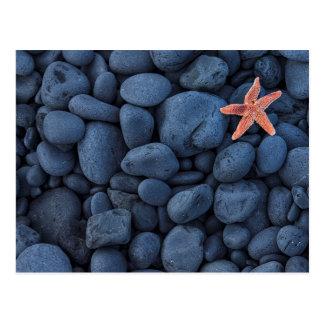 Estrellas de mar en rocas negras a lo largo de la tarjeta postal