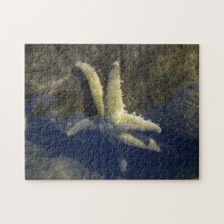 Estrellas de mar en una piscina de la marea puzzle