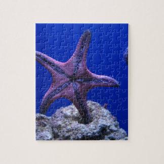 ¡Estrellas de mar, estrella brillante! Rompecabeza
