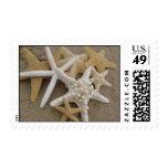 Estrellas de mar (estrellas de mar) sello