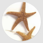 Estrellas de mar etiquetas redondas