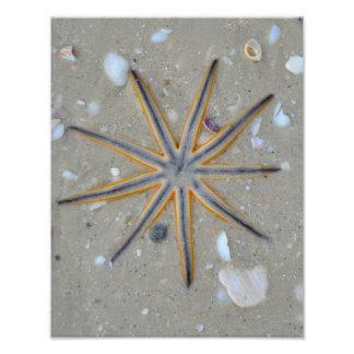 Estrellas de mar fotografía