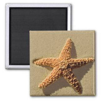 Estrellas de mar imán