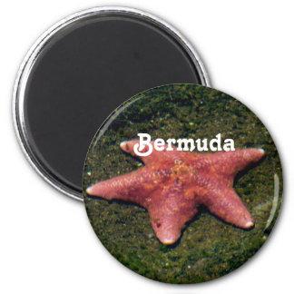 Estrellas de mar imán redondo 5 cm