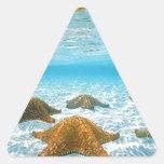 estrellas de mar island.jpg calcomanías trianguladas