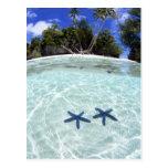 Estrellas de mar, islas del rock, Palau 2 Tarjeta Postal