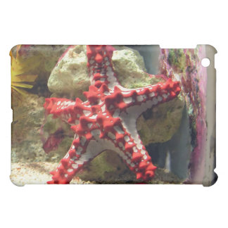 Estrellas de mar nudosas rojas - tiro increíble